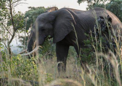 Afrika018