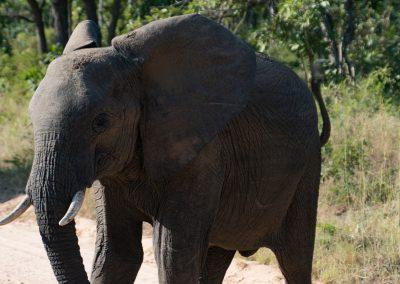 Afrika035