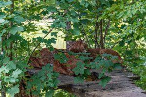 Grünau, Cumberland Wildpark, Luchs